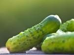 Pepis Biogurkerl